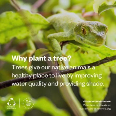 Forests_Fact_Why plant a tree_