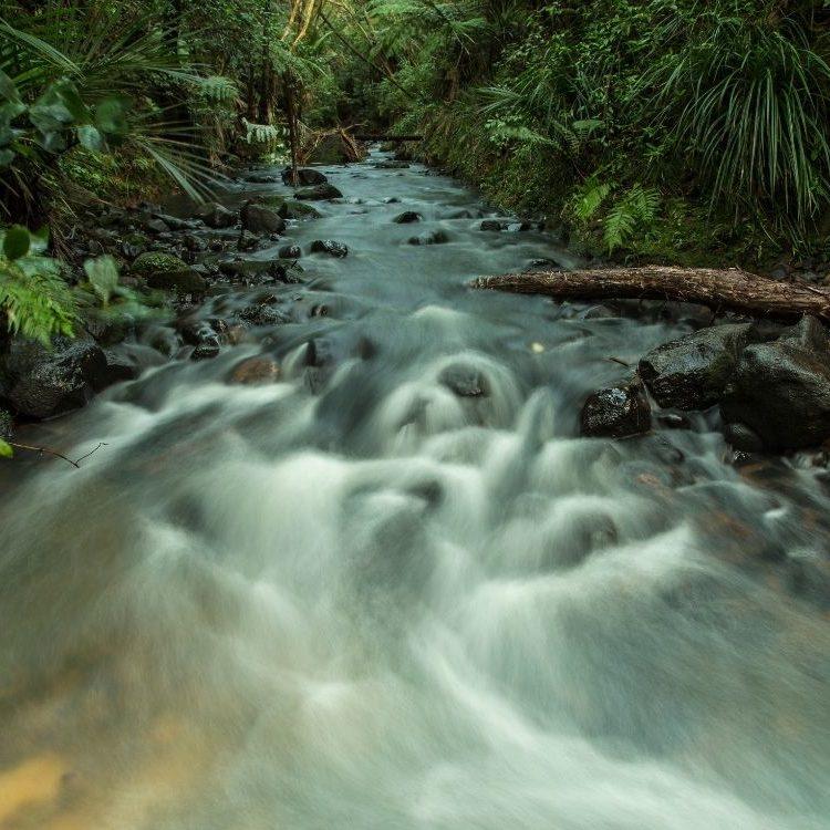 Image tile_freshwater habitats