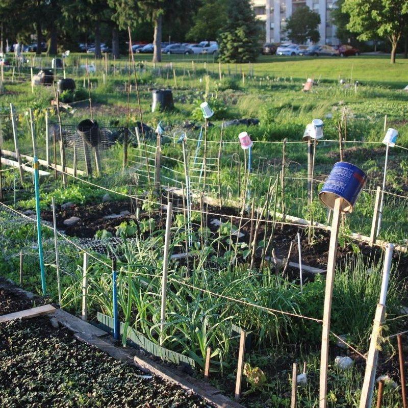 Regeneration in ciites Community garden1