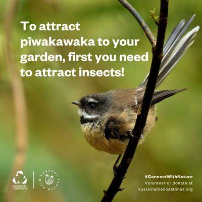 Urban nature_Fact_Encourage piwakawaka