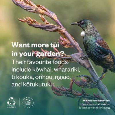 Urban nature_Fact_Encourage tui