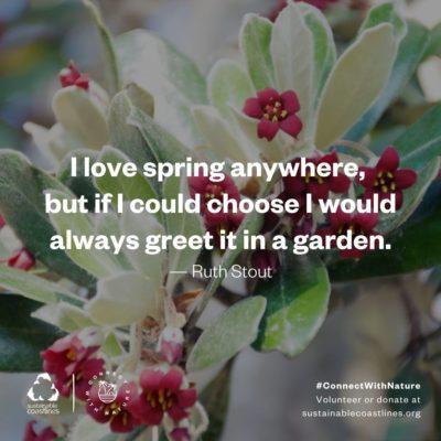 Urban nature_Quote_Spring